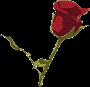 red-rose-162186_1280