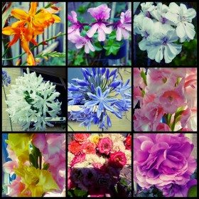 summerflowers2015